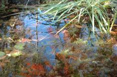 pond_0034-235x156