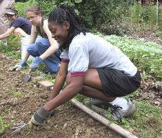 garden volunteers at work