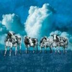 """""""Cows at Cockslease Farm"""" (John Margerum)"""
